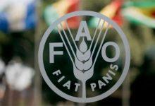 Photo of ФАО: Во јуни, првпат годинава, се зголеми цената на храната