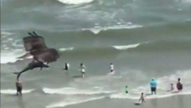 Photo of Орел улови ајкула (видео)