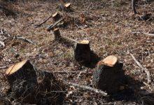 Photo of Фатени тројца стружани при кражба на дрва