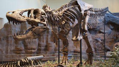 Photo of Скелет од тираносаурус оди на наддавање во Лондон