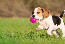 """Photo of """"Лајка"""" вдоми кучиња во Германија, Белгија и Шведска"""