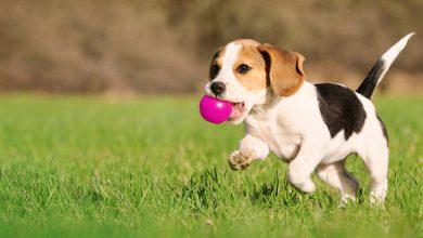 Photo of Лајка: Топлотниот бран влијае и врз животните, внимавајте на своите миленици