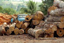 Photo of Рекордна сеча на бразилските дождовни шуми во 2020 година