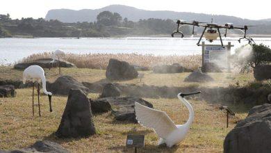 Photo of Во Јужна Кореја поради птичји грип усмртени околу 400 илјади живина