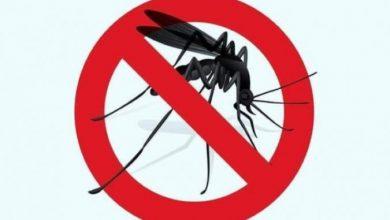 Photo of Пет начини да ги избегнете комарците