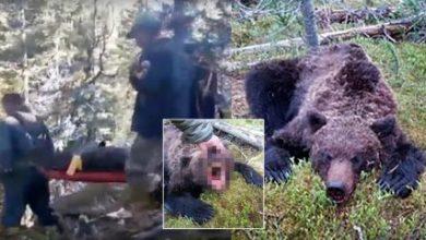 Photo of Мечка во Русија изеде тинејџер