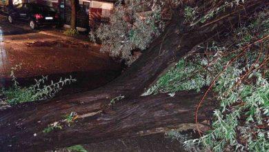 Photo of Невреме во Струмичко: откорнати дрвја и урнат електричен столб