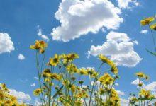 Photo of Претпладне сончево со до умерена облачност, попладне нестабилно со дожд, грмежи и засилен ветер