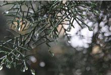 Photo of УХМР: До крајот на денов наместа нестабилно со пороен дожд, грмежи и засилен ветер