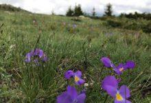 Photo of Уникатната убавина на Шар Планина конечно ќе биде крунисана во Национален парк