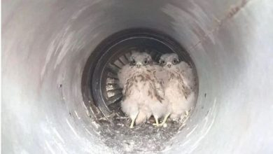 Photo of Два мали орли спасени во последен миг