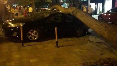 Photo of Дрво паднало во Дебар маало. Повредило дете и оштетило возило