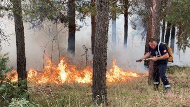 Photo of Пожар на Водно, при увидот пронајдени саксии со канабис