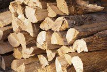 Photo of Приведени две лица во беровско поради нелегална сеча на букови стебла