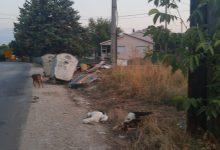 Photo of (ФОТО) Во селото Орешани убиени два штрка