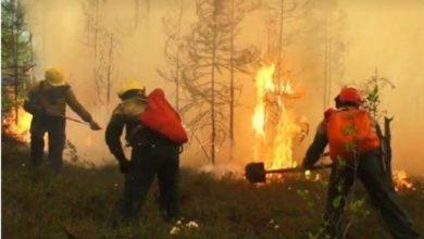 Photo of Во Сибир беснеат повеќе од 220 шумски пожари