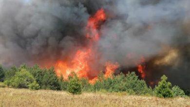 Photo of ВИДЕО: Голем пожар во Пехчево, граѓаните молат за помош