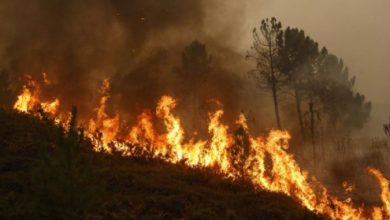 Photo of Скопските пожарникари на помош во Пехчево