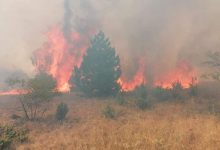 Photo of (ВИДЕО) Пожарот кај Пехчево се шири кон Берово, градоначалникот бара помош од населениет