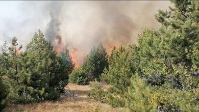 Photo of Хеликоптери ќе го гасат пожарот кај Пехчево, најавена помош и од Бугарија