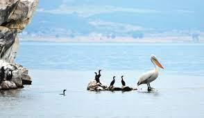 """Photo of """"Велт"""" со репортажа за пеликаните на Преспанското Езеро"""