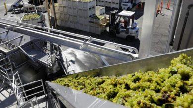 """Photo of Договорени откупните цени на грозјето За """"смедеревка"""" ќе се плаќа 10, а за """"вранец"""" 12 денари за килограм"""