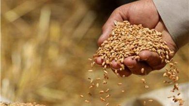 Photo of Рекордни поскапувања  кај пченицата, маслото и млекото